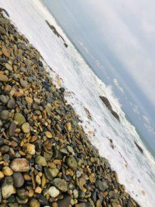 流木や貝拾い